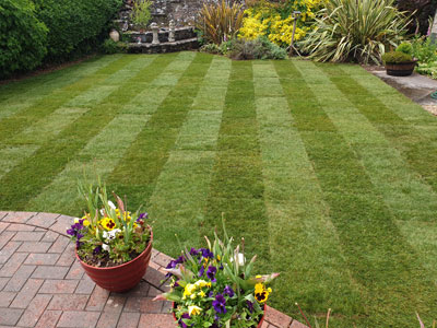 New Lawn from turf in Churchill, Somerset